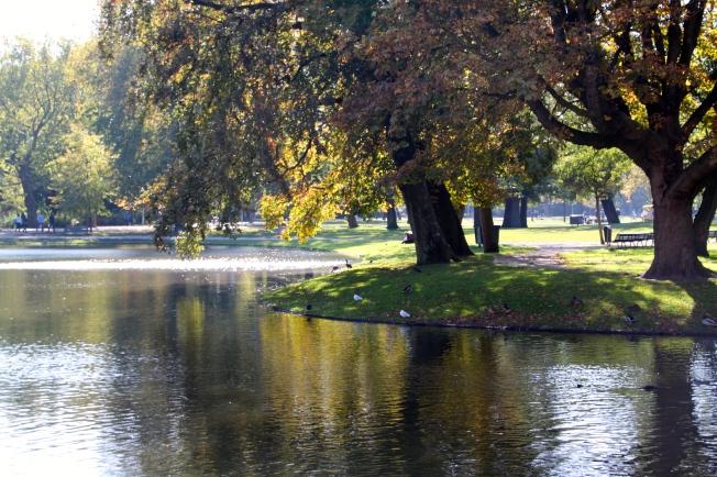 Pequeño estanque en Vondelpark