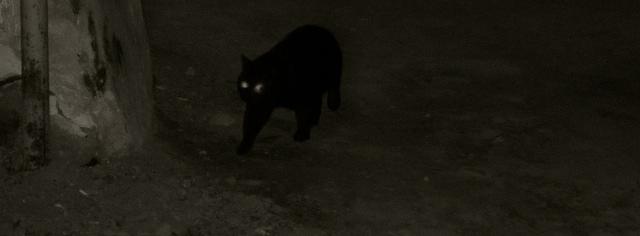 Gato Negro en Sighiosara